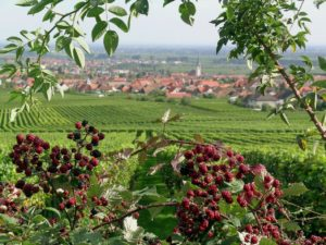 Wine with a view: Enjoy the Heidelberg region with a glass of house-made wine at Best Western Plus Palatin Hotel Wiesloch