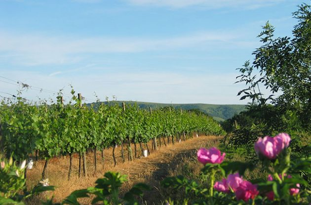 Young winemakers needed: UK college highlights 'shortage'