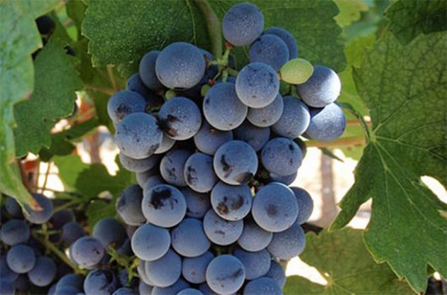 DAWA 2017: Chinese Marselan wine scoops top award