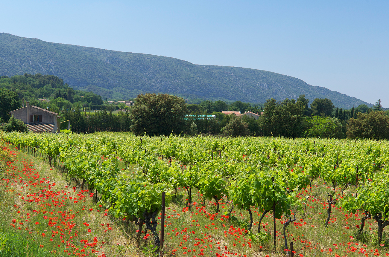 Provence winemakers share grapes in climate response