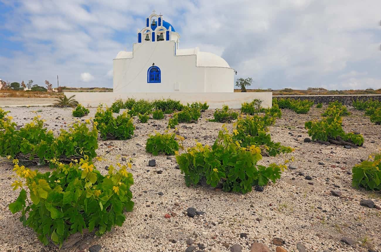 Small Santorini harvest may raise prices for Assyrtiko wines