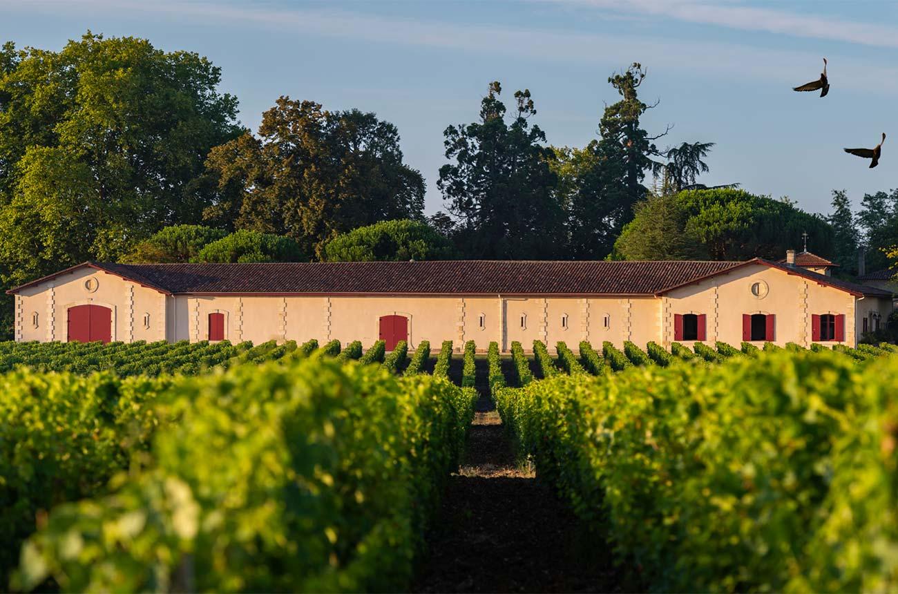 Best Bordeaux 2019 wines: Best value reds