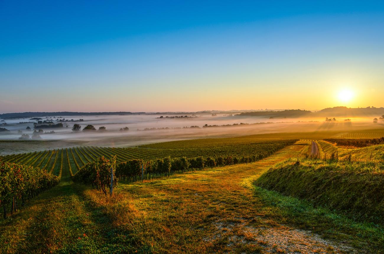 Best Médoc & Haut-Médoc, Moulis & Listrac 2019 wines tasted en primeur