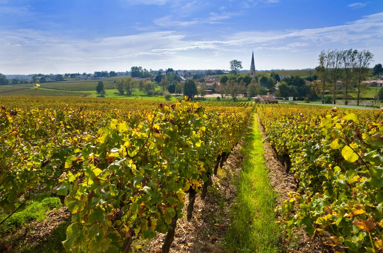 Best Sauternes & Barsac 2019 wines tasted en primeur
