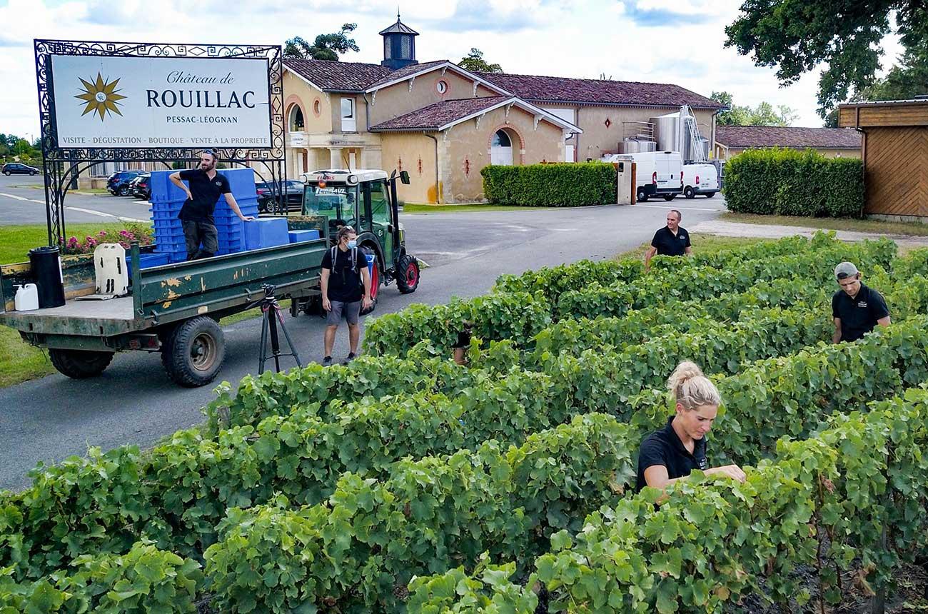 Bordeaux 2020 white wine harvest starts early