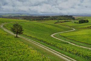 Top scoring AOC Chablis 2019 wines