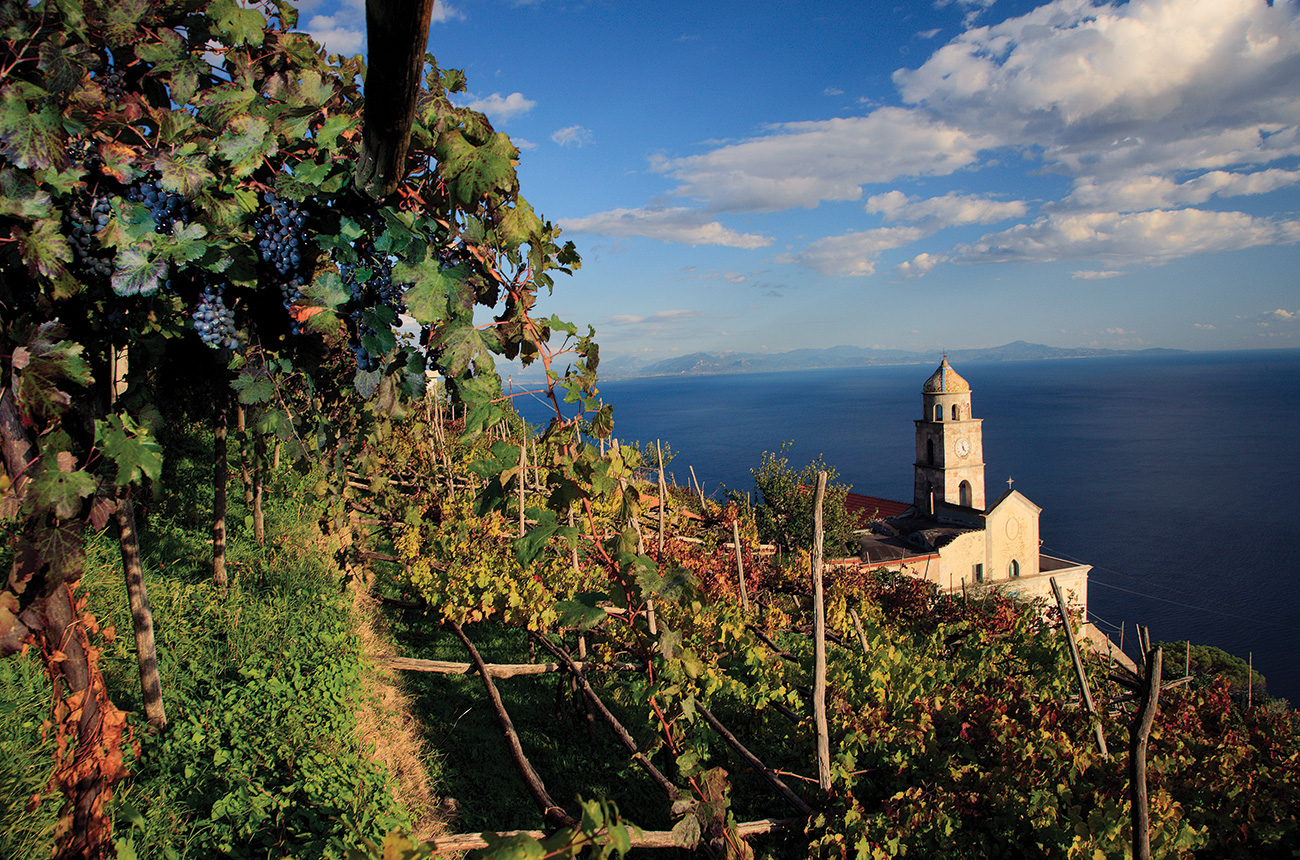 Campania: regional profile plus 30 great wines to try