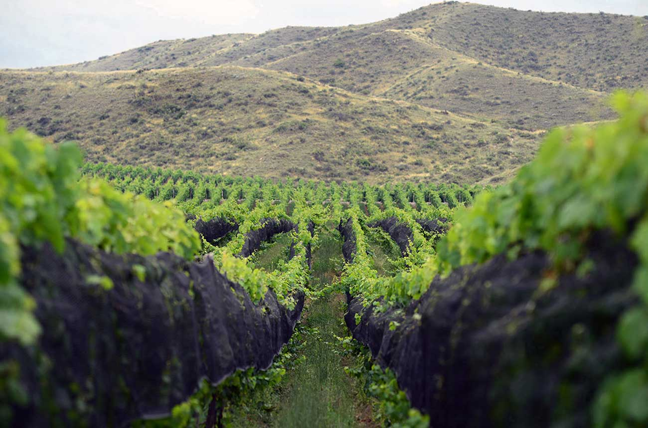 Anson: New Catena Institute study shows the value of terroir