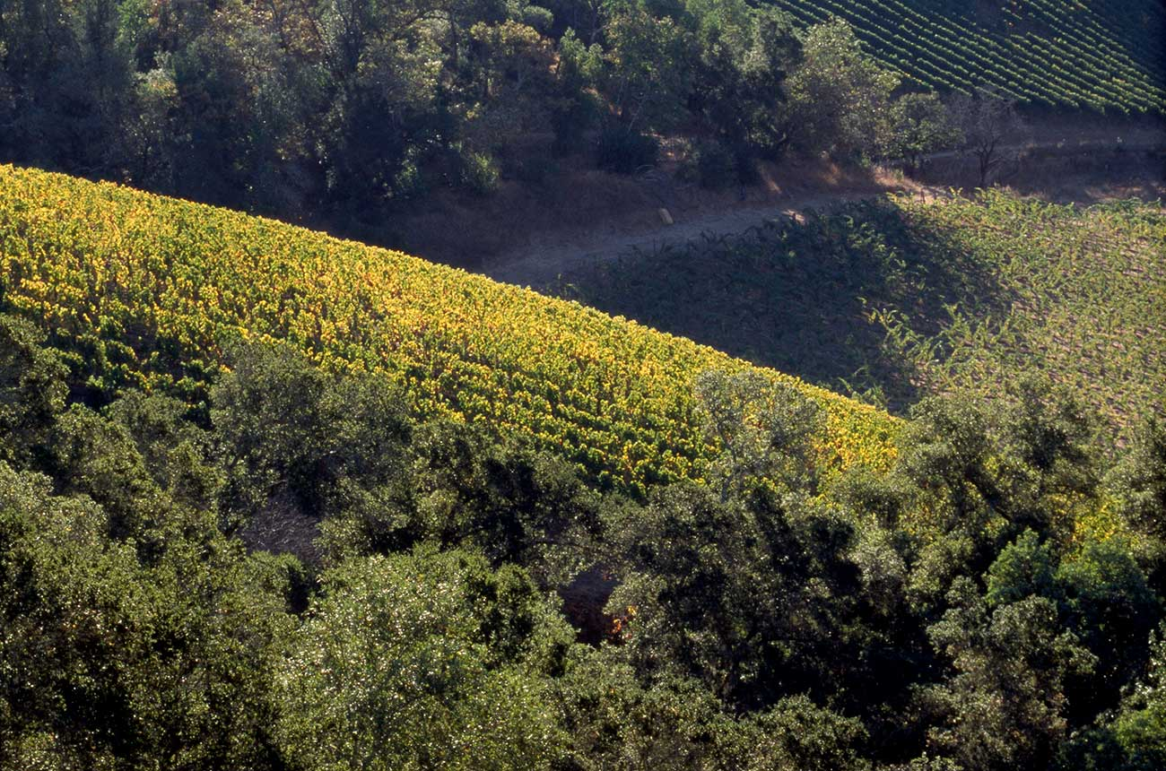 Harlan Estate: next generation takes the reins in Napa