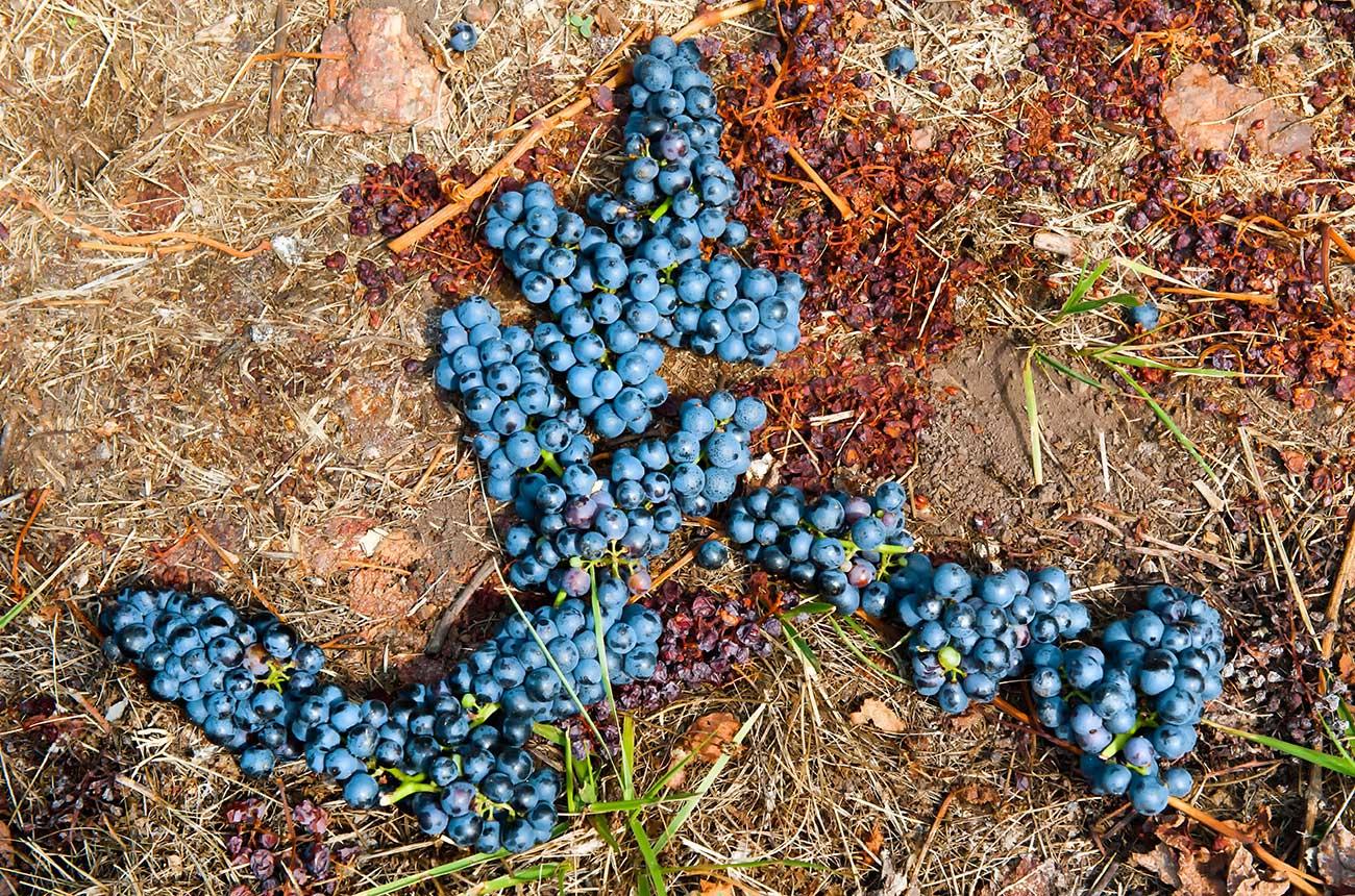 What do Tannat wines taste like?