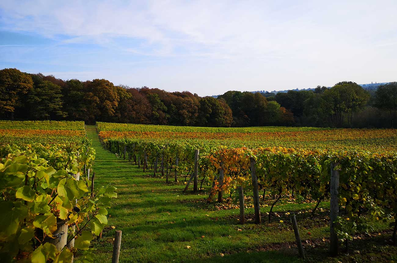 Property: English Pinot Noir vineyard listed for sale