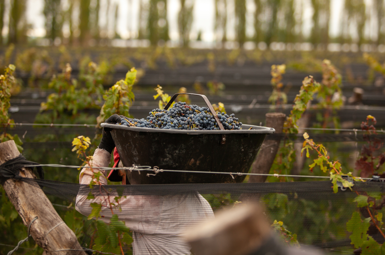 Argentina harvest 2021 report: 'Extraordinary and surprisingly healthy'