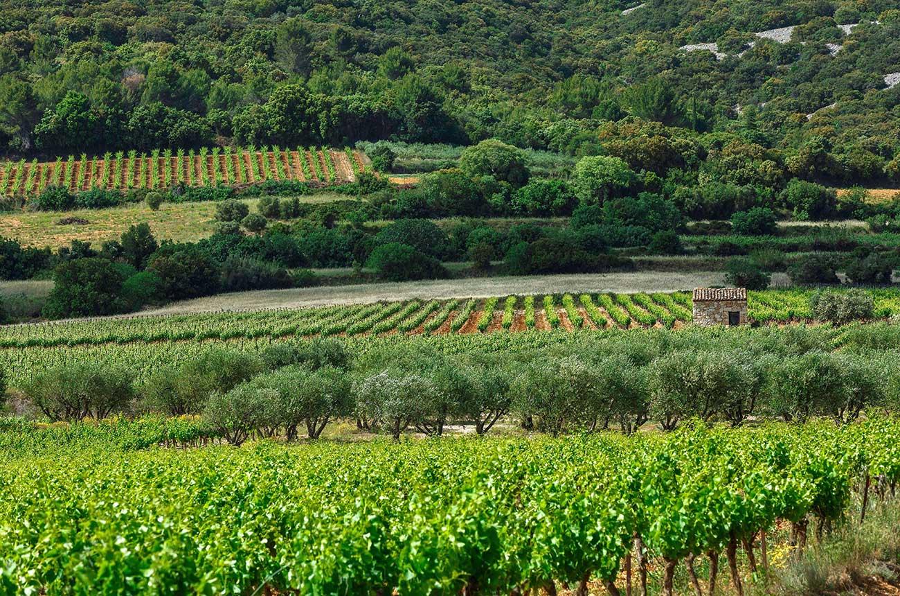 Wine 'Mozart' Laurent Vaillé of Grange des Pères dies