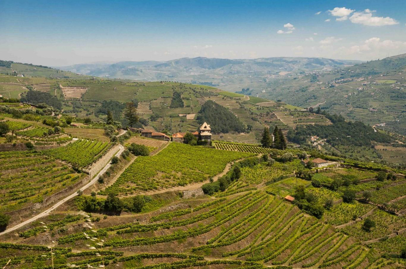 Douro vineyard with valley and river views for sale