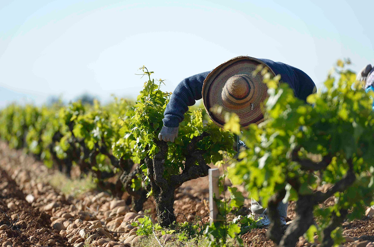 Southern Rhône white wines: how do they compare?