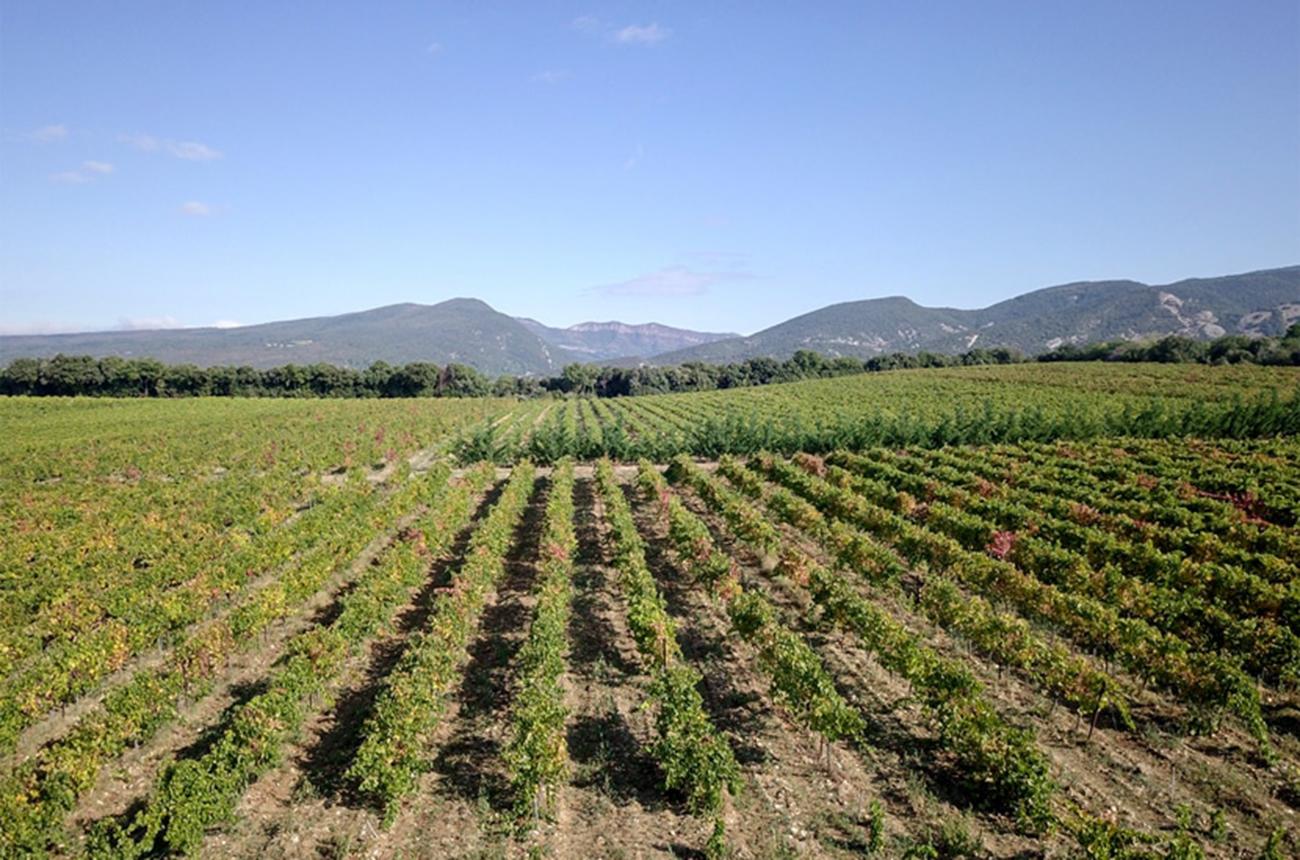 Rhône producer to know: Domaine Gramenon, Vinsobres