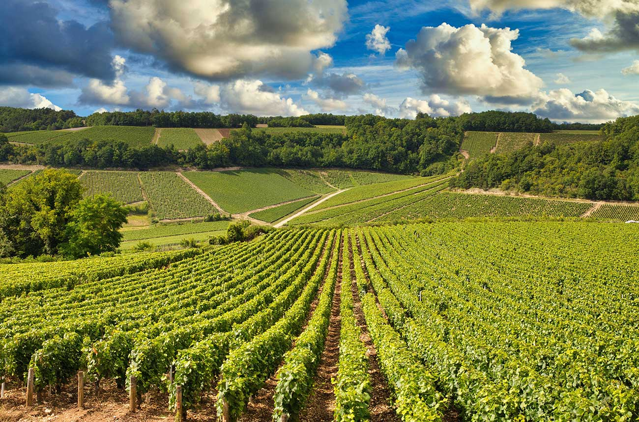 2021 harvest update: France looking at historically small crop