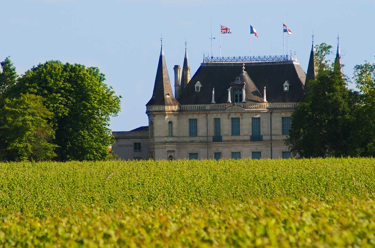 Bordeaux sees sharp growth in organic vineyards